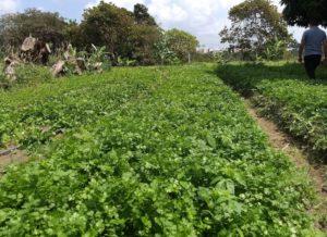 IMG 20200728 111444 300x218 - João Pessoa: Prefeitura transforma a vida de produtores rurais na Paraíba; VEJA