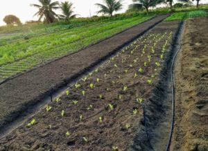 IMG 20200728 111501 300x218 - João Pessoa: Prefeitura transforma a vida de produtores rurais na Paraíba; VEJA